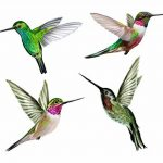 Hummingbird Window Stickers de la marque Stickers4 image 1 produit