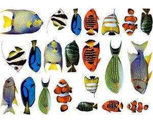 Sticker mural fischaufkleber lot de 22 stickers muraux multicolore 30x20cm de la marque Samunshi image 0 produit