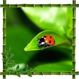 stickers coccinelle TOP 5 image 0 produit