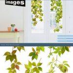 Stickers Fenêtres Vigne vierge Nouvelles Images 69.5 x 49 x 0.1 cm de la marque NOUVELLES-IMAGES image 1 produit
