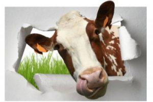 stickers vache TOP 0 image 0 produit
